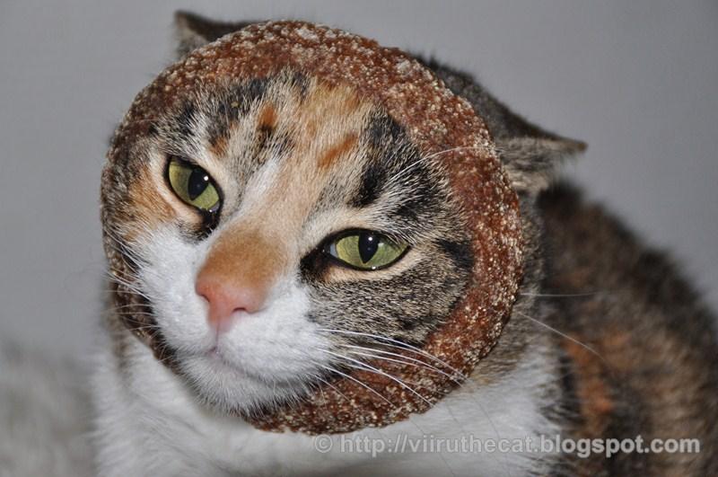 Kissa Laihtuu Vaikka Syö